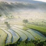 حقول زراعية متدرجة في جزيرة بالي - 4812
