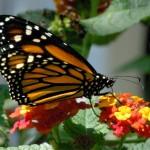 بالصور والمعلومات أكبر حدائق الفراشات فى كوالا لمبور