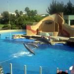 عرض 22 الدلافين في عالم البحار سان دييغو، كاليفورنيا - 13034