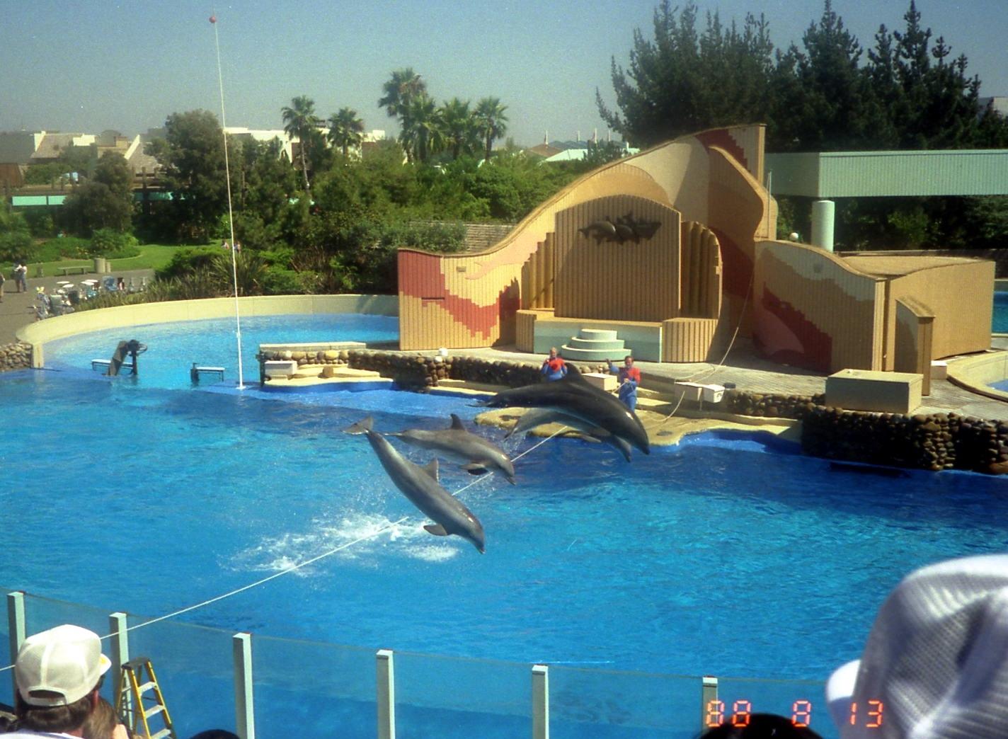 عرض 22 الدلافين في عالم البحار سان دييغو، كاليفورنيا