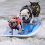 ثلاثة كلاب تركب الامواج