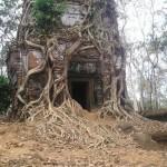 شجرة الحديد