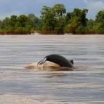 مدينة كراتي لرؤية الدلافين النادرة في كمبوديا