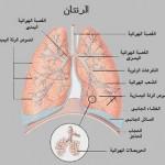 اعراض و علاج التهاب الشعب الهوائية الحاد