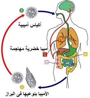 الوقاية والعلاج من الجيارديا - المرسال
