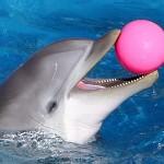 صور ومعلومات عن الدلفين