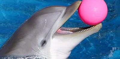 معلومات الدولفين وأنواعه Dolphin