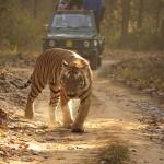 محمية النمور بالحديقة الوطنية كنهو في الهند