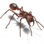 النمل - 29159
