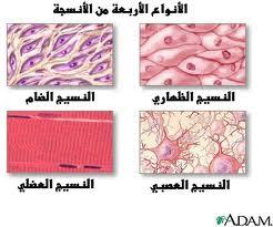 انواع الخلايا التي تنتشر في المادة الخلالية للنسيج الضام الرخو