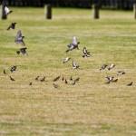 مجموعات من طائر الحسون  - 37189