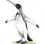 صوره توضح شكل البطريق القديمه - 40007