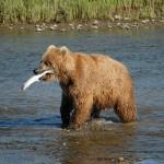 صور ومعلومات عن الدب