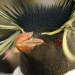 صورة مقربة لوجة البطريق - 40011