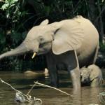 صور ومعلومات عن الفيله