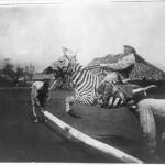 ركوب حمار وحشي في شرق أفريقيا، حوالي 1900