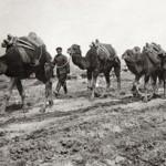قافلة الإبل من الجيش البلغاري خلال حرب البلقان الأولى ، 1912