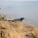صور لحرباء فى احدى الجبال العربيه - 38735