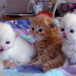 تربية القطط - 46075