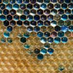 معجزة اكتشاف العسل الملون في فرنسا