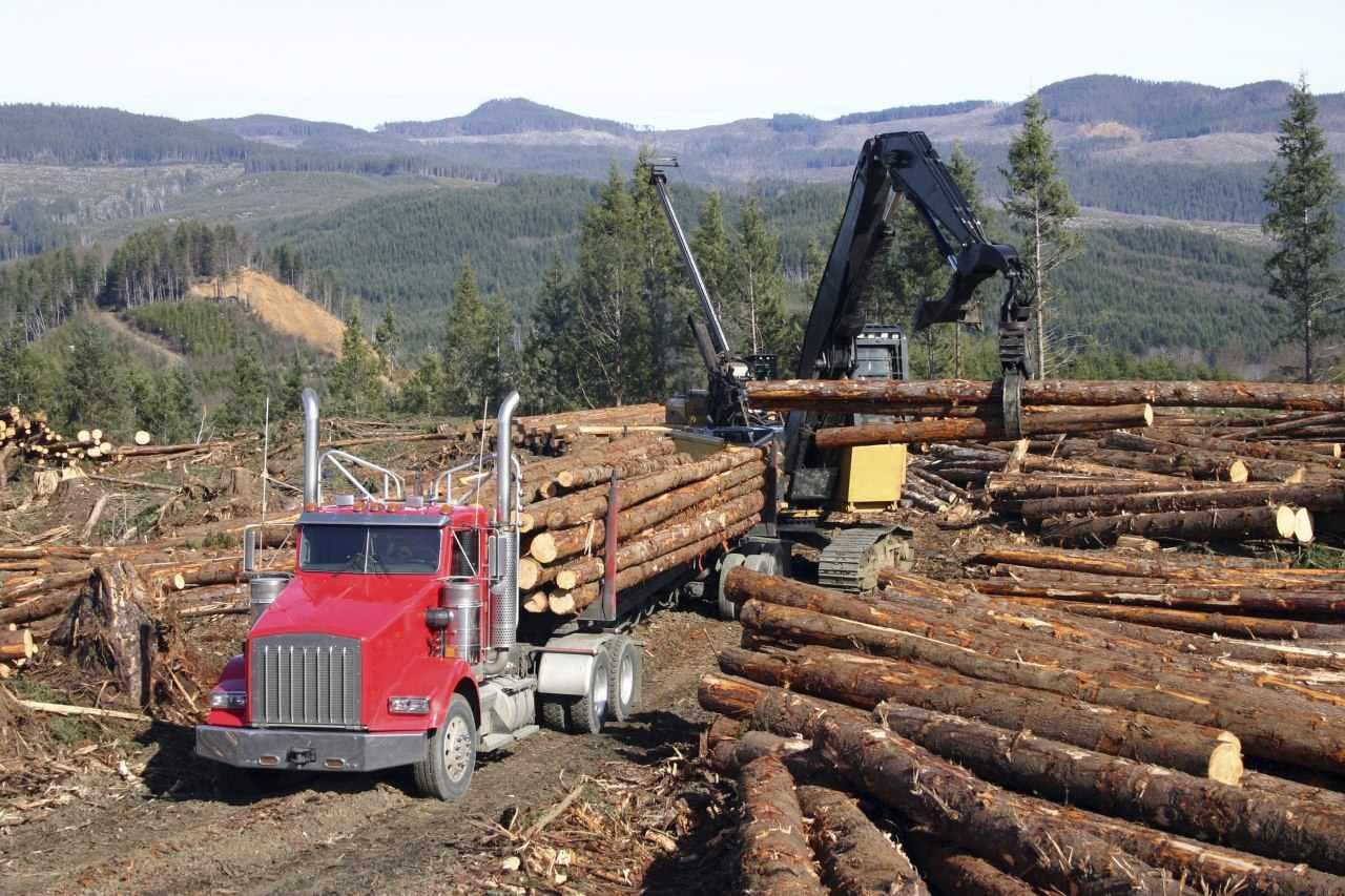 تخريب غابات الامازون