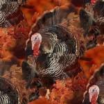 ذكر الرومي أكبر من الإناث (الدجاجة)