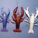 انواع جراد البحر