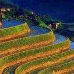 مدرجات مزارع الارز في الفلبين