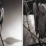 طائر البومة المتجمد في بحيرة الناترون