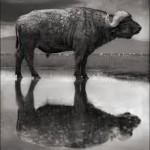 تجمد الحيوانات في البحيرة القاتله