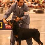 كلب روت فايلر في بطولة العالم للكلب 2006