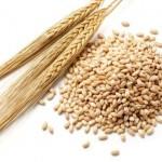 القيمة الغذائية للقمح والشعير