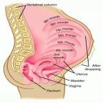اسباب و علاج بواسير الحمل