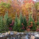حديقة مقاطعة ألغونكوين . . . اقدم حديقة محلية في كندا