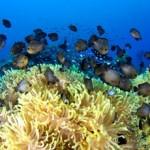الاتحاد الدولي لحفظ الطبيعة IUCN