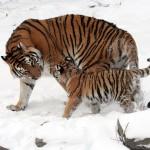 حيوانات مهددة بالانقراض في العالم