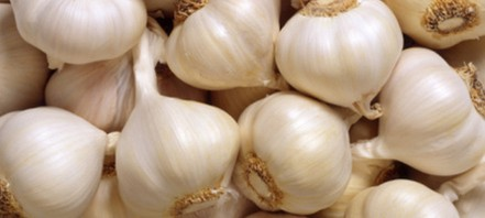 فائدة الثوم للرجال Benefit-of-garlic-for-sex-441x198