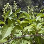 علاج التهاب المفاصل بالاعشاب