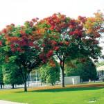 معلومات عن شجرة النيم وفوائدها