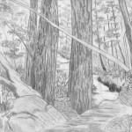 غابات مرسومة بالقلم الرضاص - 103431