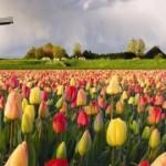 اهم الاماكن السياحية في هولندا
