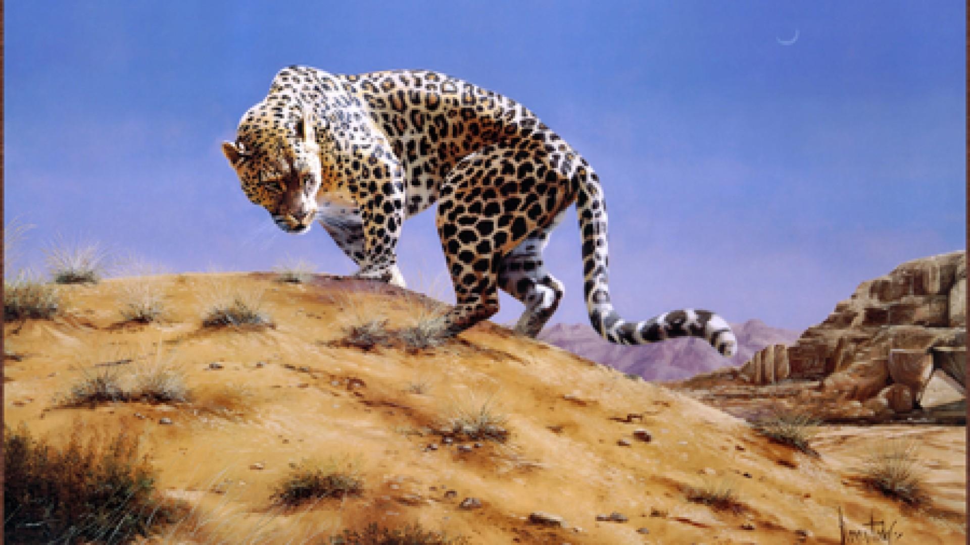 النمر العربي أصغر بكثير من النمر الأفريقي   المرسال