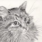 قطه مرسومة بالقلم الرضاص - 103436