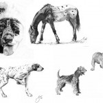 حيوانات مرسومة  بالقلم الرضاص - 103437