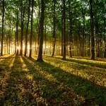 اجمل غابات في العالم