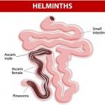 علاج الديدان المعوية