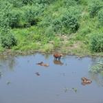 pantanal - 119390