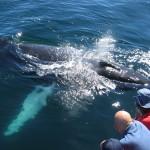 اماكن تواجد الحيتان حول العالم