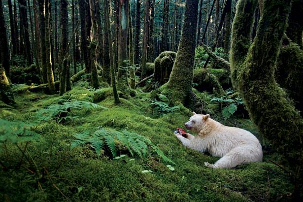 صورة لدب يجلس بالغابة