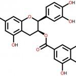 فوائد مادة الفلافونويدات